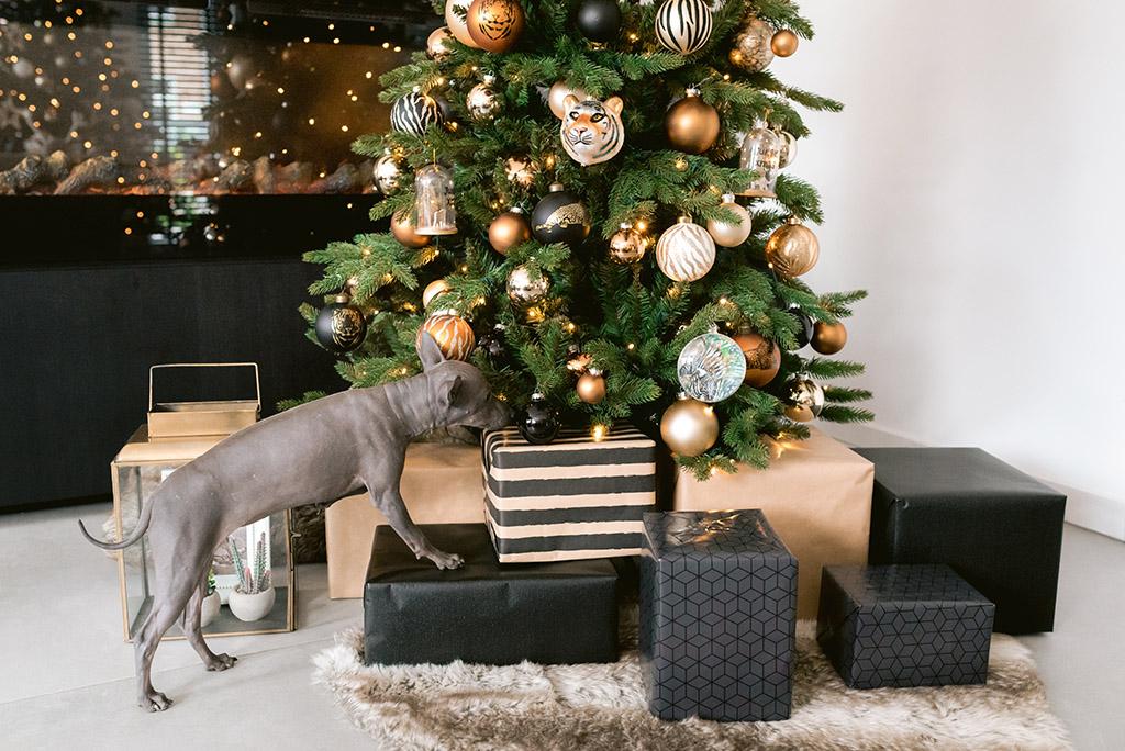 Kerstbomen & huisdieren: zo zorg je dat jouw kerstboom de feestdagen overleeft